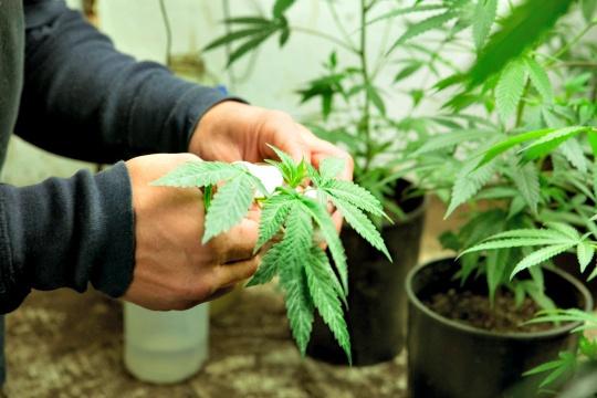 Marijuana Can Treat Arthritis, Diabetes?