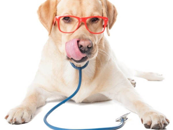 Relieve Stress With Our Top 3 Favourite Pets