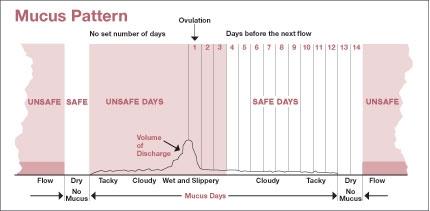 Ovulation Calculator Based On Female Mucus