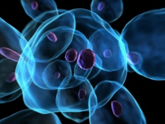 In A First, Stem Cells Cloned From Human Skin