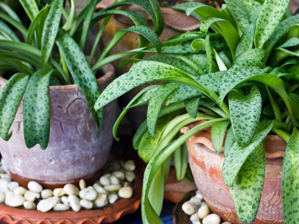 Growing Your Own Fresh Air