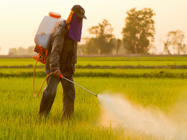 Are There Pesticides In Your Food?