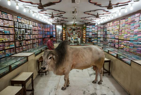 bull varanasi shop india