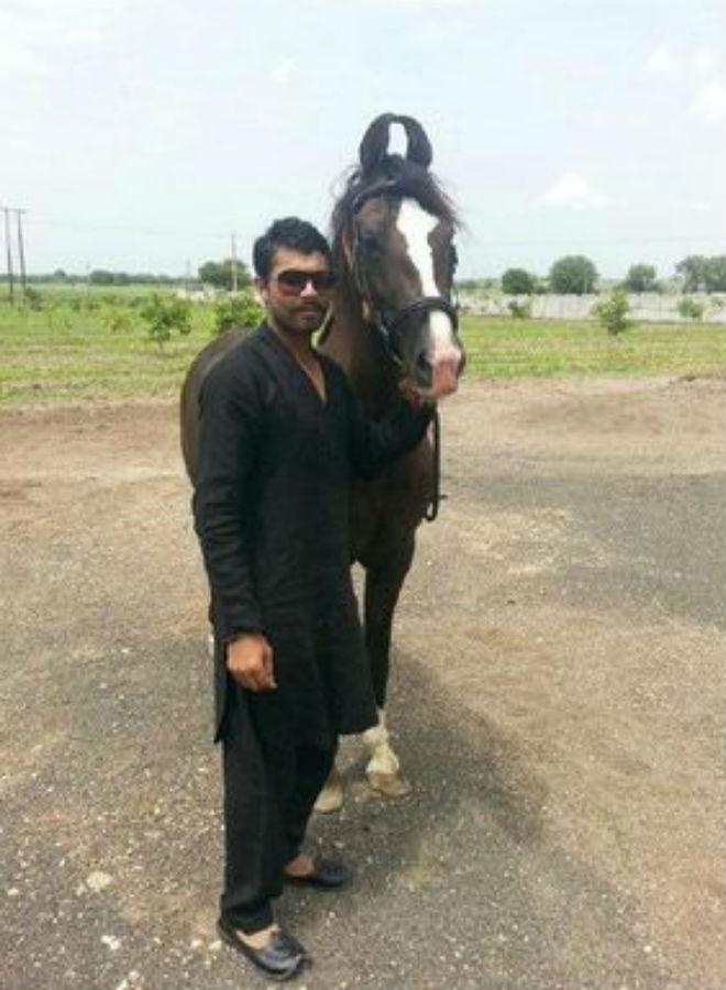 Ravindra Jadeja horse