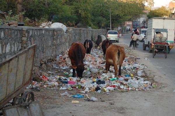 Jaipur trash