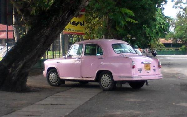 Pink ambassador