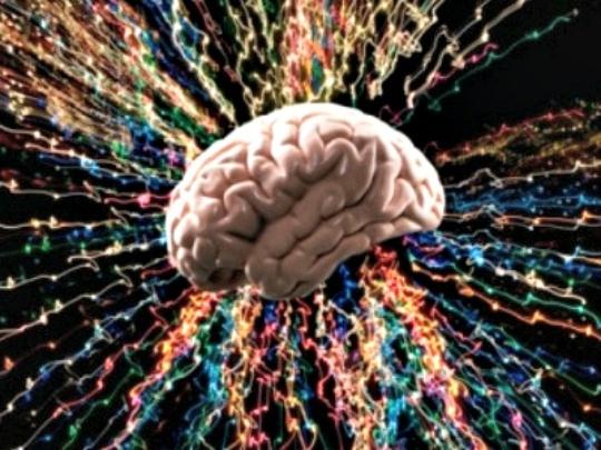 Men Have Bigger Brains Than Women, Research Reveals