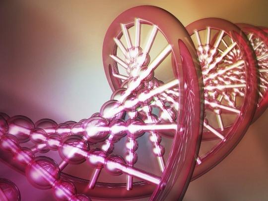 Gene That Mediates Ageing Identified