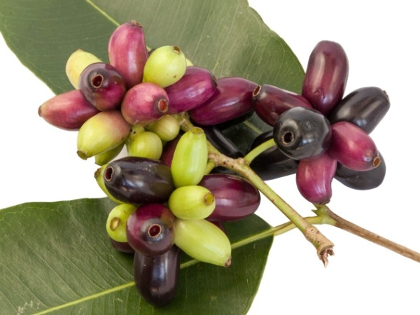 Fruits For Diabetics: Can Jamun Reduce Blood Sugar?