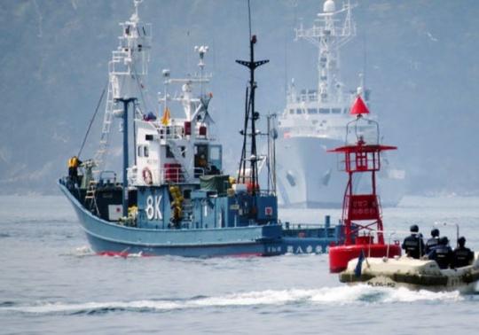 Japan Whale Hunting