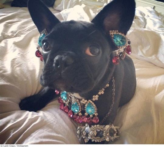 PETA Slams Gaga For Putting Jewellery On Her Pet