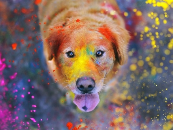 Pet Care During Holi: Protect Pets From Toxic Holi Colours