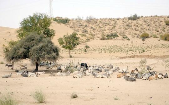 Famine Stalks Sindh Area in Pakistan, 160 Dead