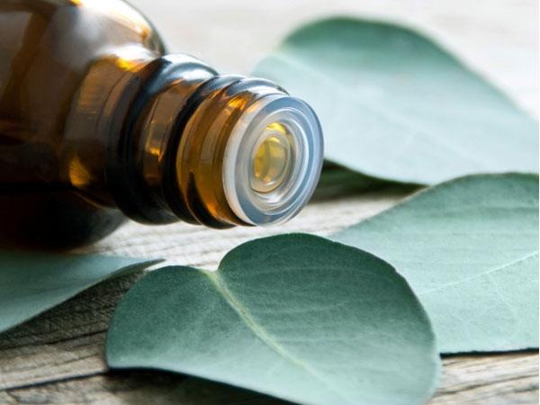 Essential Oil: Uses Of Eucalyptus Oil