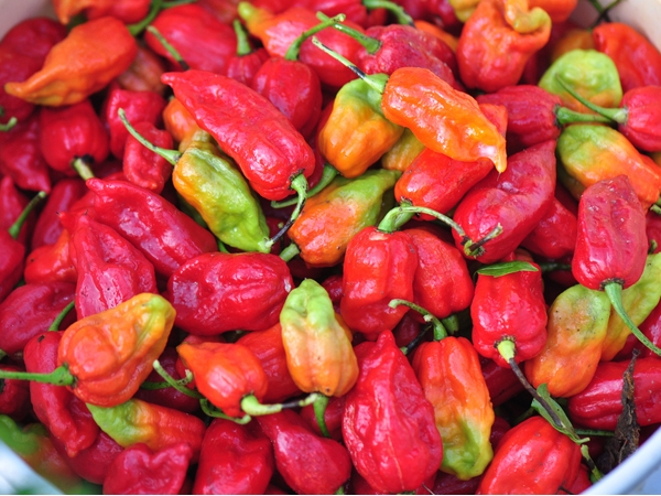 Bhut Jolokia - Your New Friend For The Winters