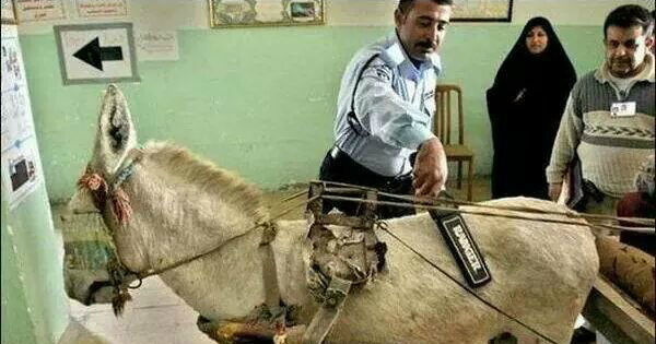 Donkey contraband