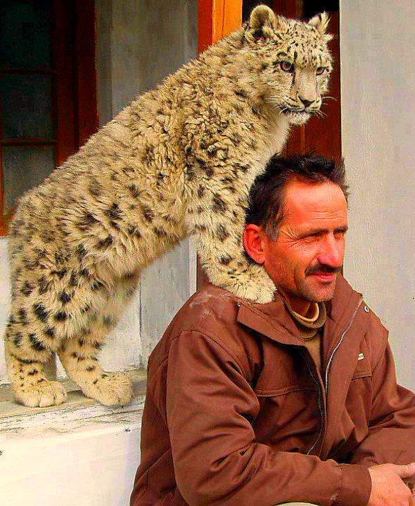 Cub with man pakistan