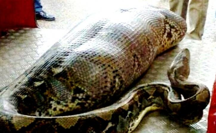 Python eats man