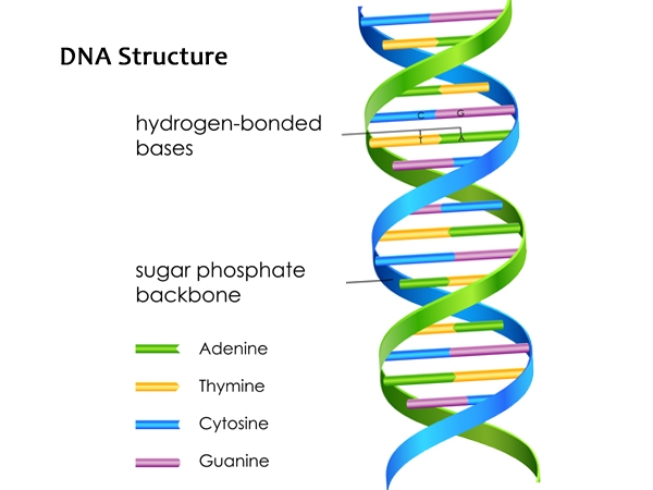 What's In Your DNA?