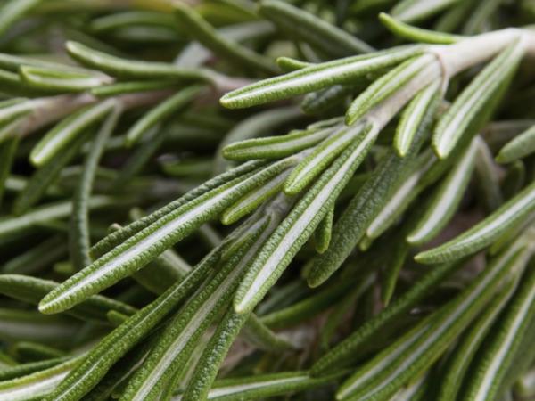 Rosemary For Health