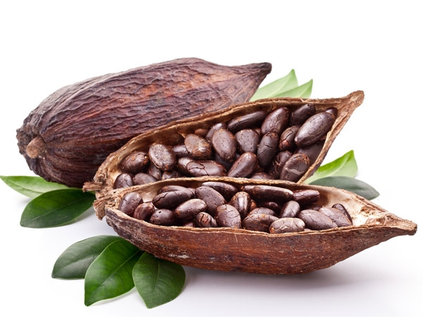 Health Benefits Of Cocoa Beans