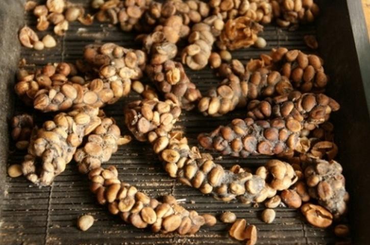 Civet coffee dung
