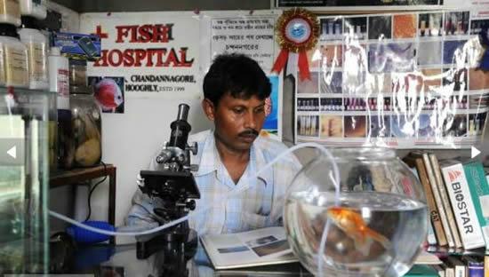 fish hospital