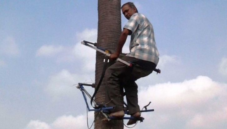 Mechanical Tree Climber