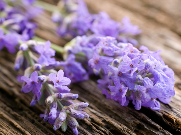 How To Use Lavender For Health