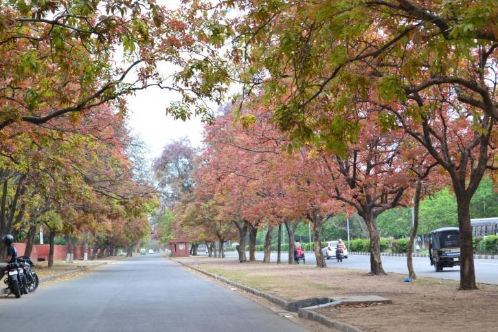 Verdant Road, Chandigarh