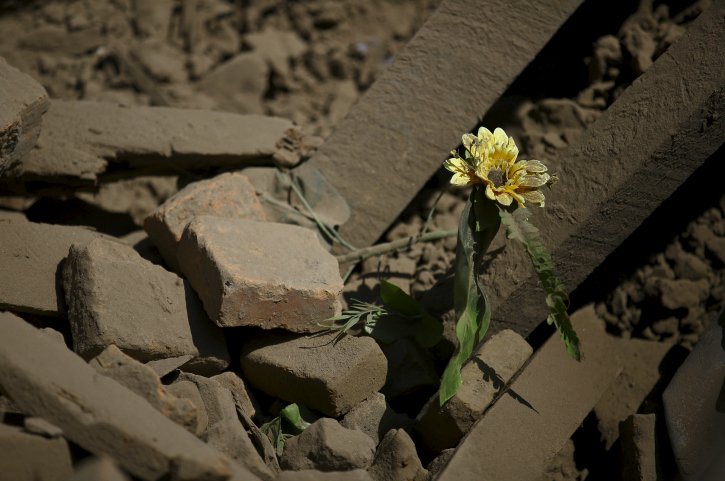 A flower grows among the rubble
