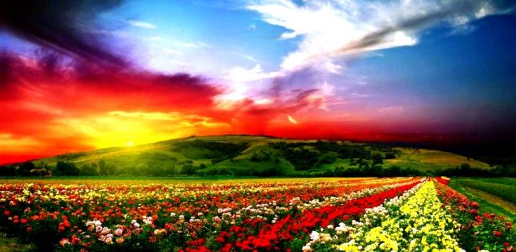 Valley Of Flowers, Uttarakhand