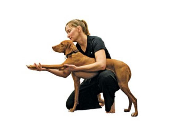 Doga Dog Yoga