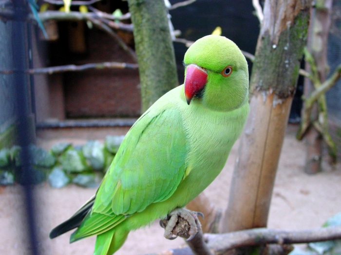 parrot arrested for shouting abuses to 85-year-old