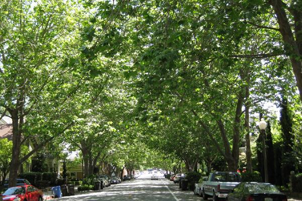 Trees Urban Air Pollution