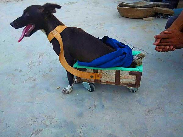 hritesh Lohiya trolley for dogs