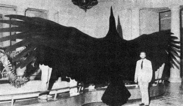 Agentinian Bird