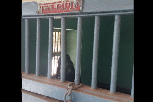 Goat Arrested In Maharashtra