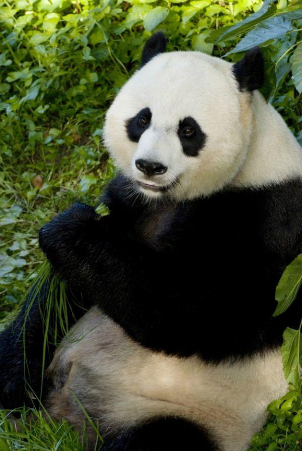 Mei Xiang