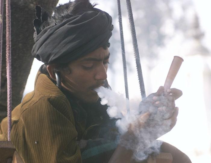weed indian kanwariya