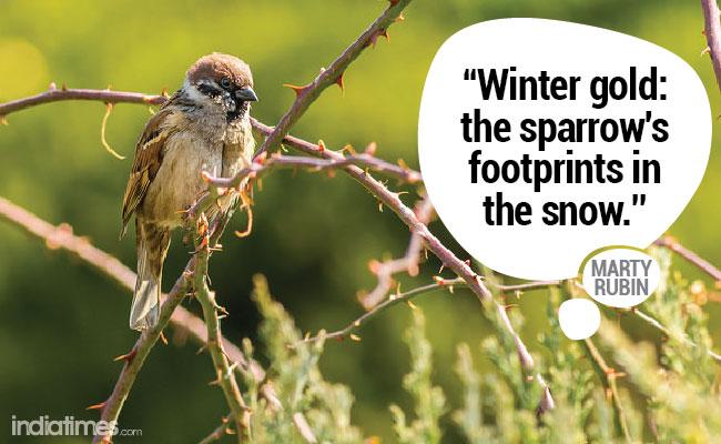 Winter quote 13