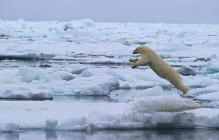 North Pole Temperature Is 20 Degrees Above Winter Normal