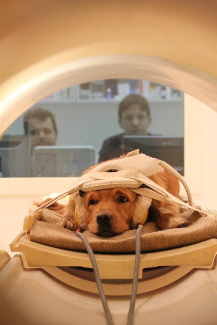 Dogs get MRI scans