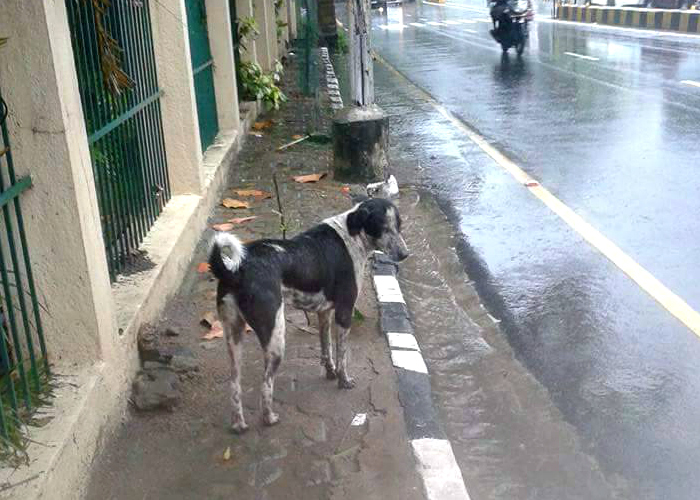 This Little Guy Playing Superhero During Chennai Floods Proves That Dog