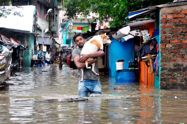 dog rescue chennai