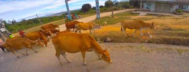 Animals in thailand