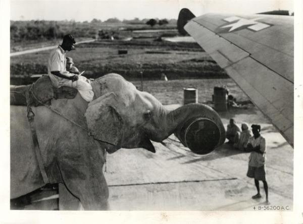 Elephant loading stuff