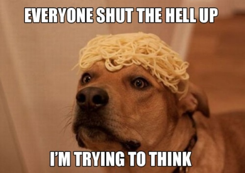 Doggy knows best.