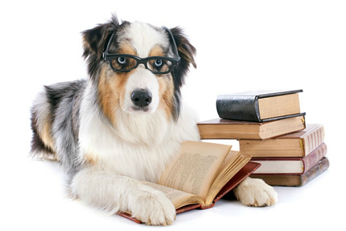 Soon All Dogs May Hold Degrees! Punjab Opens First Canine School