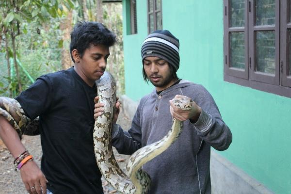 rock snake india